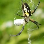 Caught in Web