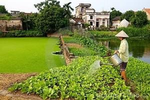 vietnamese-farmer-watering-crop-16131551